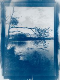 Cyanotype Amsterdamse Waterleidingduinen