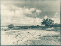 Cyanotype - Amsterdamse Waterleidingduinen