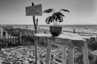 Zandvoort - 25 april 2020